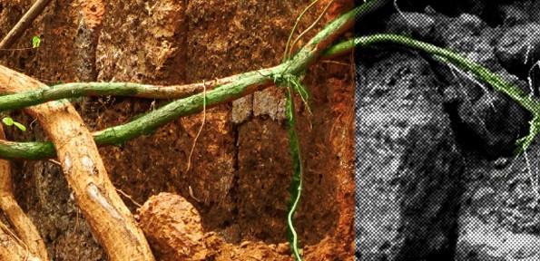 portada2 (imagen desde www.sxc.hu)